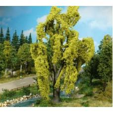 עץ ערבה בוכייה