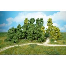 ערכה של עצי עלים שונים