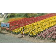 פרחים - צבעונים